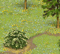 Tips & Tricks: How to Make a Meadow